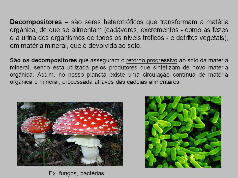 Decompositores – são seres heterotróficos que transformam a matéria orgânica, de que se alimentam (cadáveres, excrementos - como as fezes e a urina dos organismos de todos os níveis tróficos - e detritos vegetais), em matéria mineral, que é devolvida ao solo.