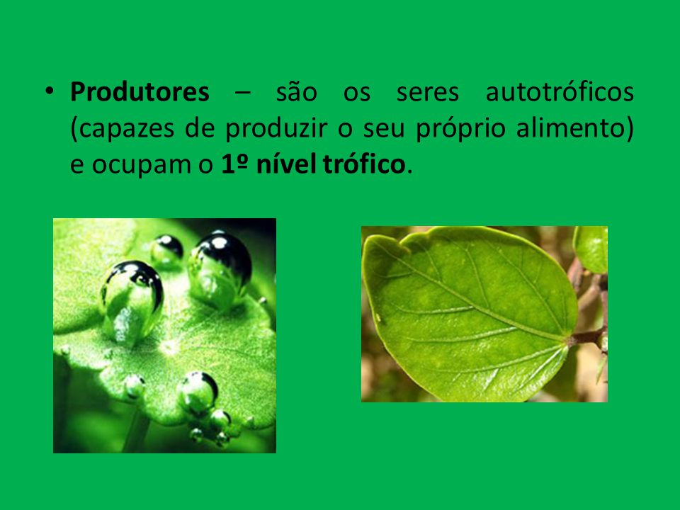 Produtores – são os seres autotróficos (capazes de produzir o seu próprio alimento) e ocupam o 1º nível trófico.