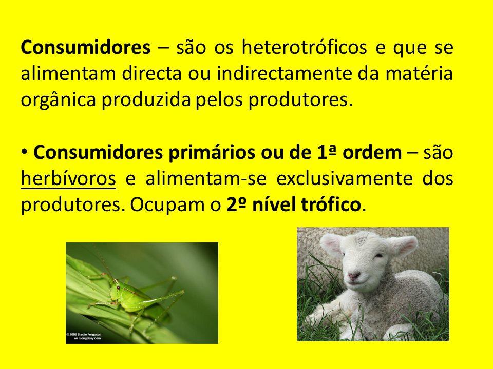 Consumidores – são os heterotróficos e que se alimentam directa ou indirectamente da matéria orgânica produzida pelos produtores.