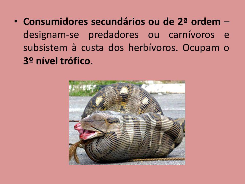 Consumidores secundários ou de 2ª ordem – designam-se predadores ou carnívoros e subsistem à custa dos herbívoros.