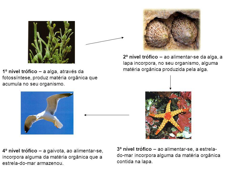 2º nível trófico – ao alimentar-se da alga, a lapa incorpora, no seu organismo, alguma matéria orgânica produzida pela alga.