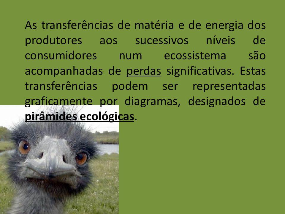 As transferências de matéria e de energia dos produtores aos sucessivos níveis de consumidores num ecossistema são acompanhadas de perdas significativas.