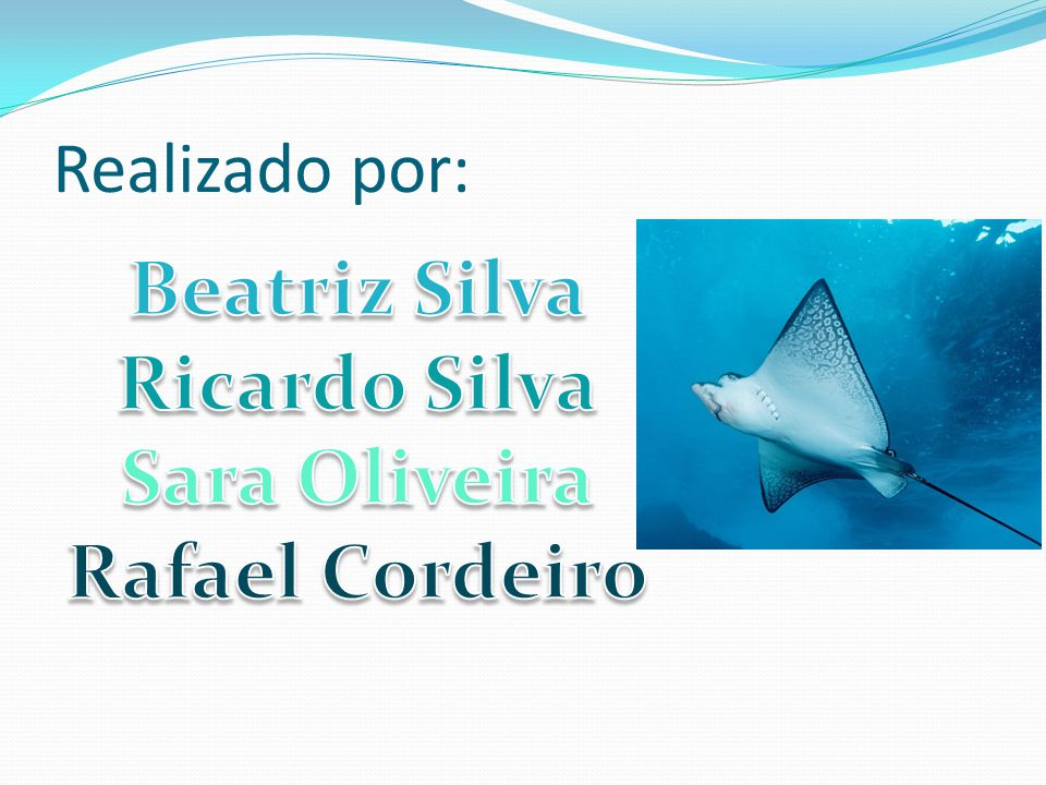 Beatriz Silva Ricardo Silva Sara Oliveira Rafael Cordeiro