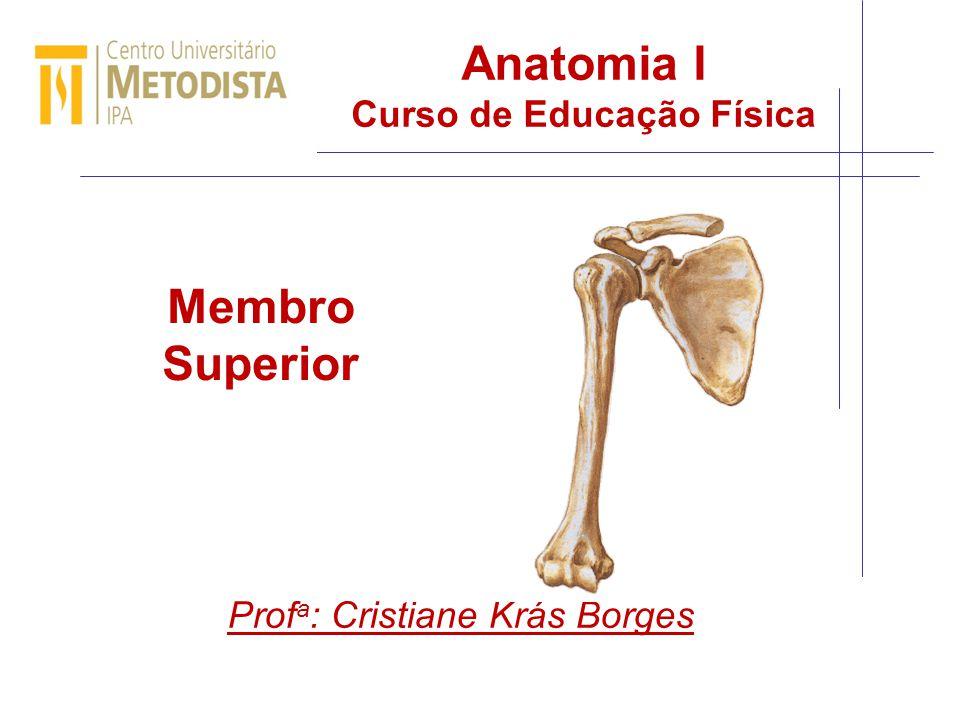 Anatomia I Curso de Educação Física - ppt video online carregar