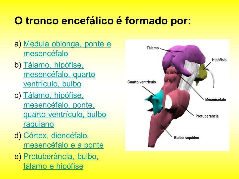 O tronco encefálico é formado por: