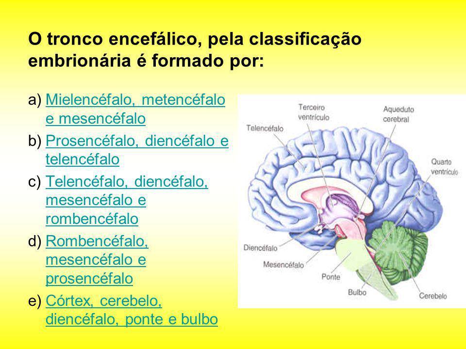 O tronco encefálico, pela classificação embrionária é formado por: