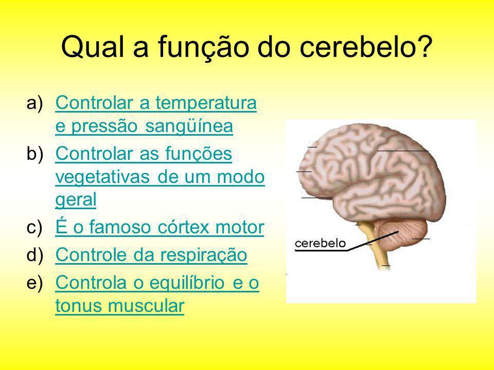 Qual a função do cerebelo