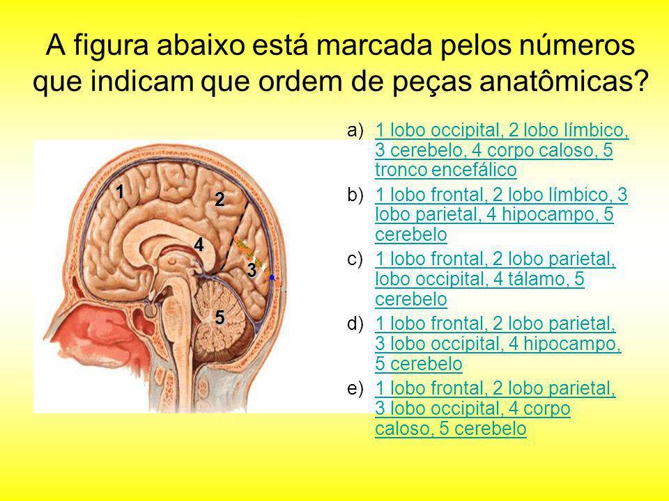 A figura abaixo está marcada pelos números que indicam que ordem de peças anatômicas