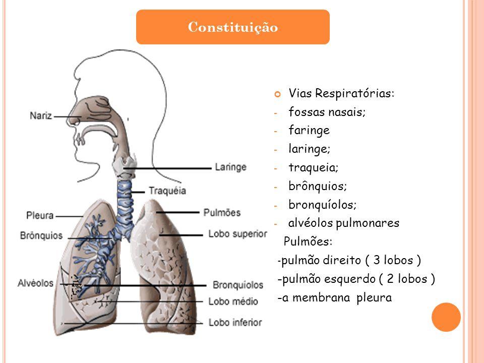 Constituição Vias Respiratórias: fossas nasais; faringe laringe;