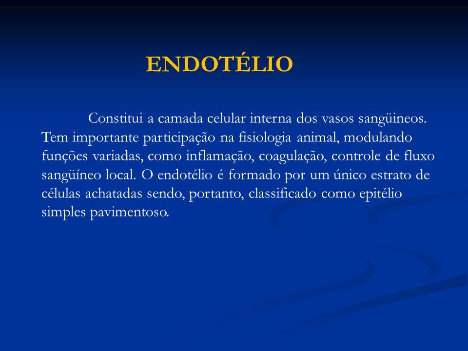 ENDOTÉLIO