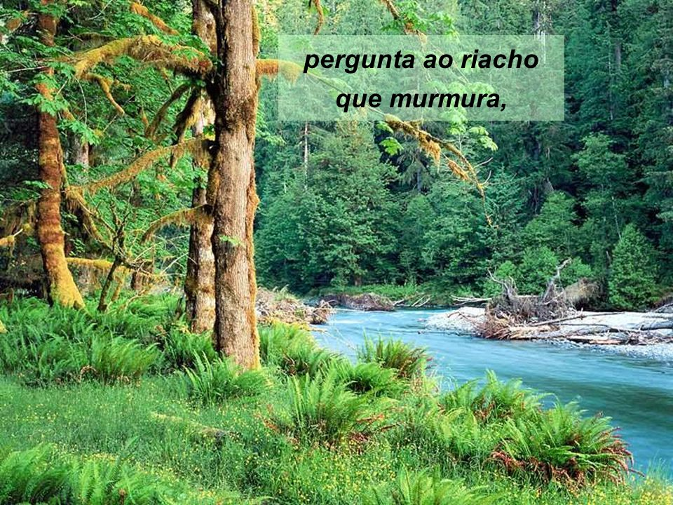 pergunta ao riacho que murmura,