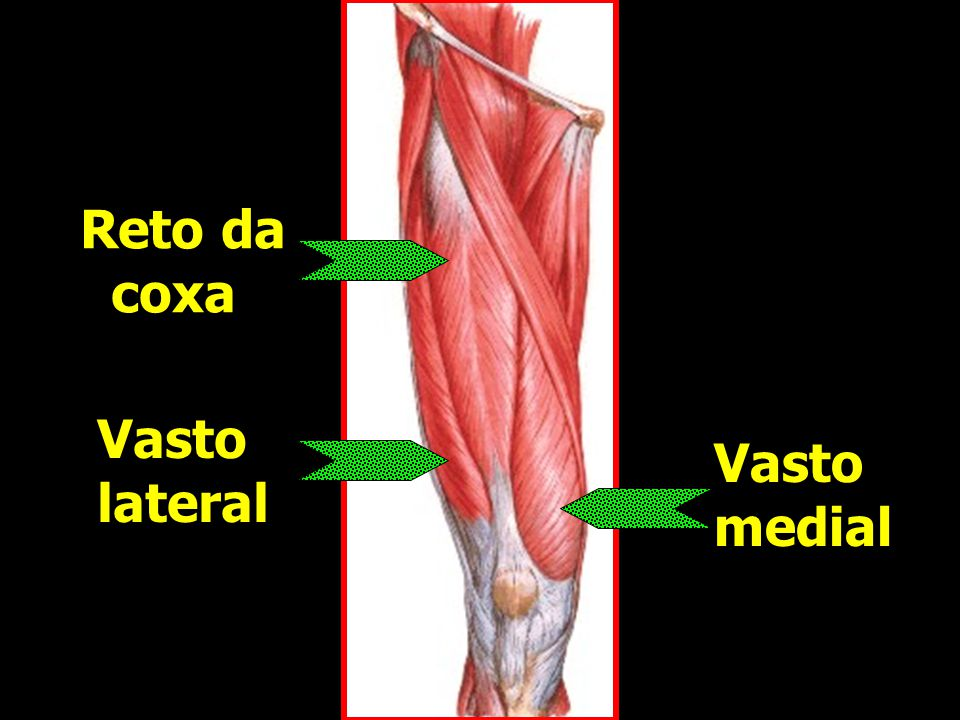 Reto da coxa Vasto lateral Vasto medial