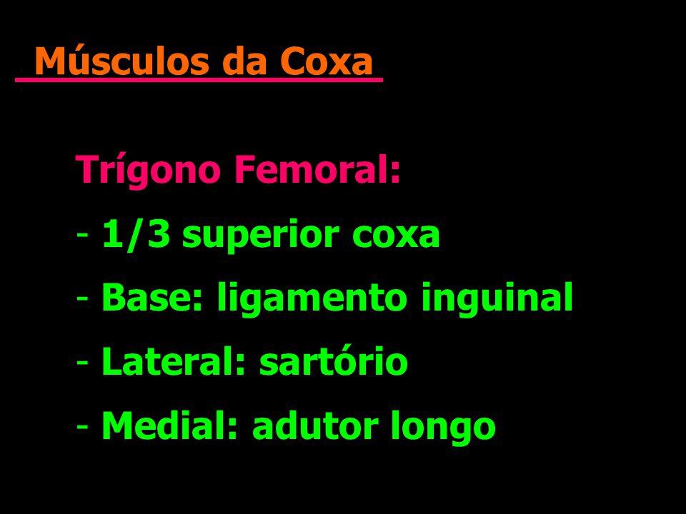 Músculos da Coxa Trígono Femoral: 1/3 superior coxa. Base: ligamento inguinal. Lateral: sartório.