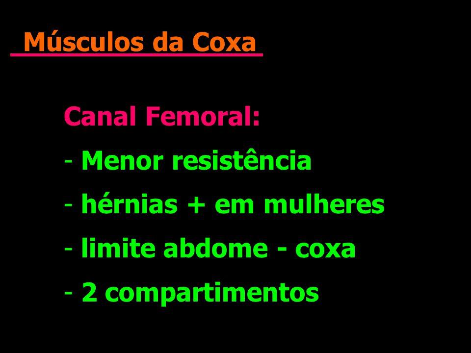 Músculos da Coxa Canal Femoral: Menor resistência.