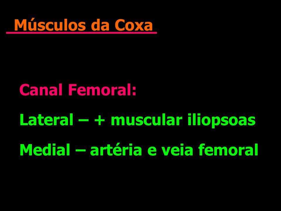 Músculos da Coxa Canal Femoral: Lateral – + muscular iliopsoas Medial – artéria e veia femoral