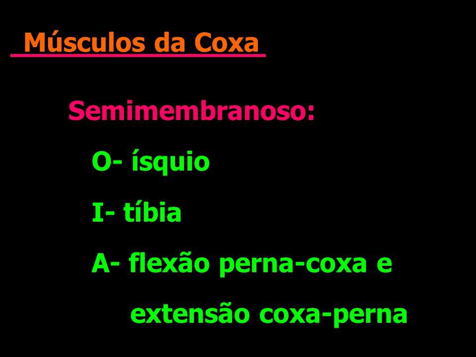 Músculos da Coxa Semimembranoso: O- ísquio I- tíbia A- flexão perna-coxa e extensão coxa-perna