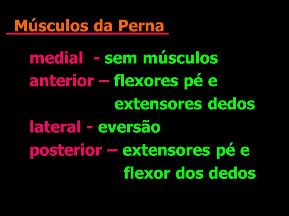 Músculos da Perna medial - sem músculos. anterior – flexores pé e. extensores dedos. lateral - eversão.