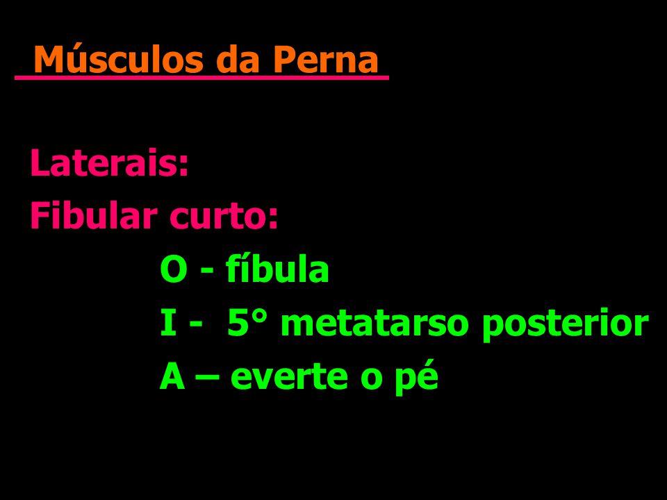 Músculos da Perna Laterais: Fibular curto: O - fíbula I - 5° metatarso posterior A – everte o pé