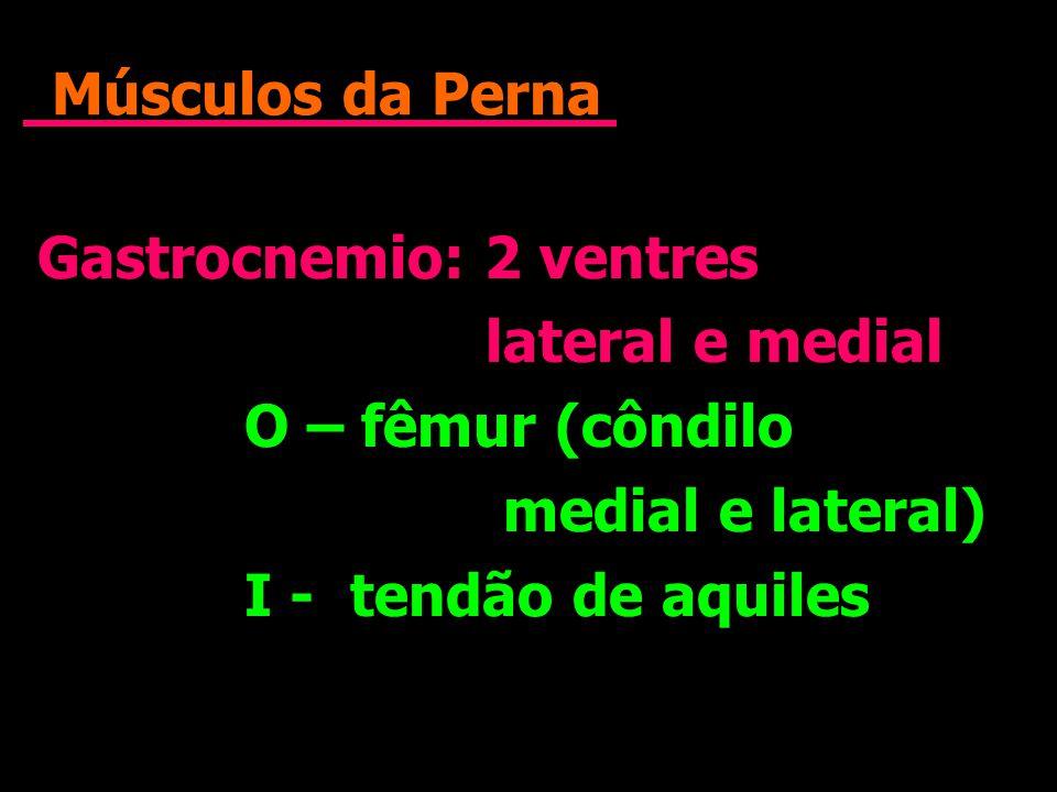 Músculos da Perna Gastrocnemio: 2 ventres. lateral e medial. O – fêmur (côndilo. medial e lateral)