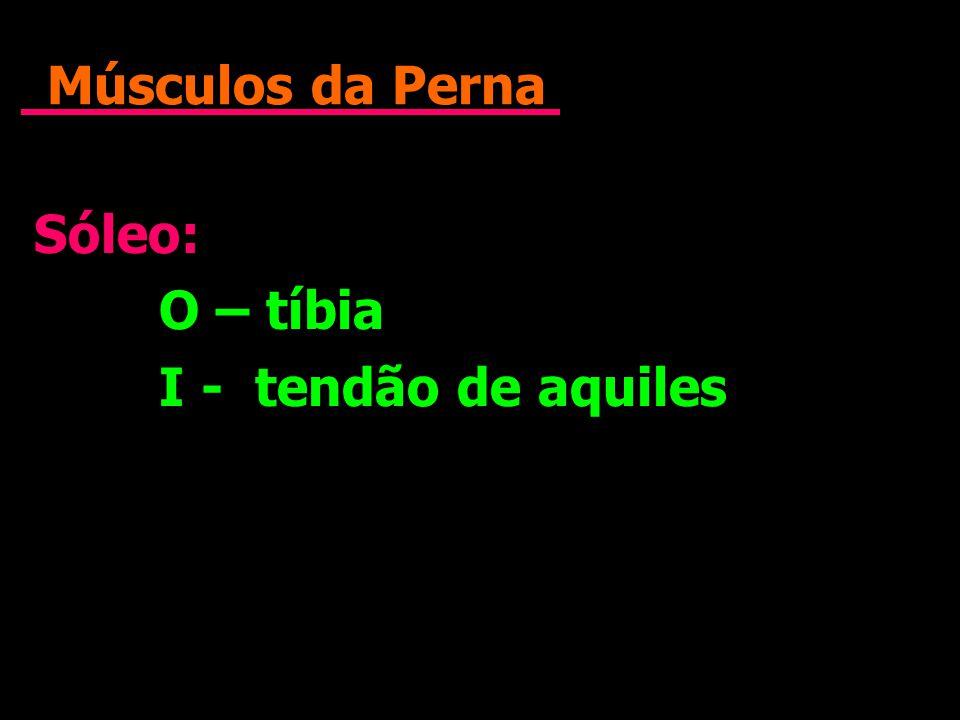 Músculos da Perna Sóleo: O – tíbia I - tendão de aquiles