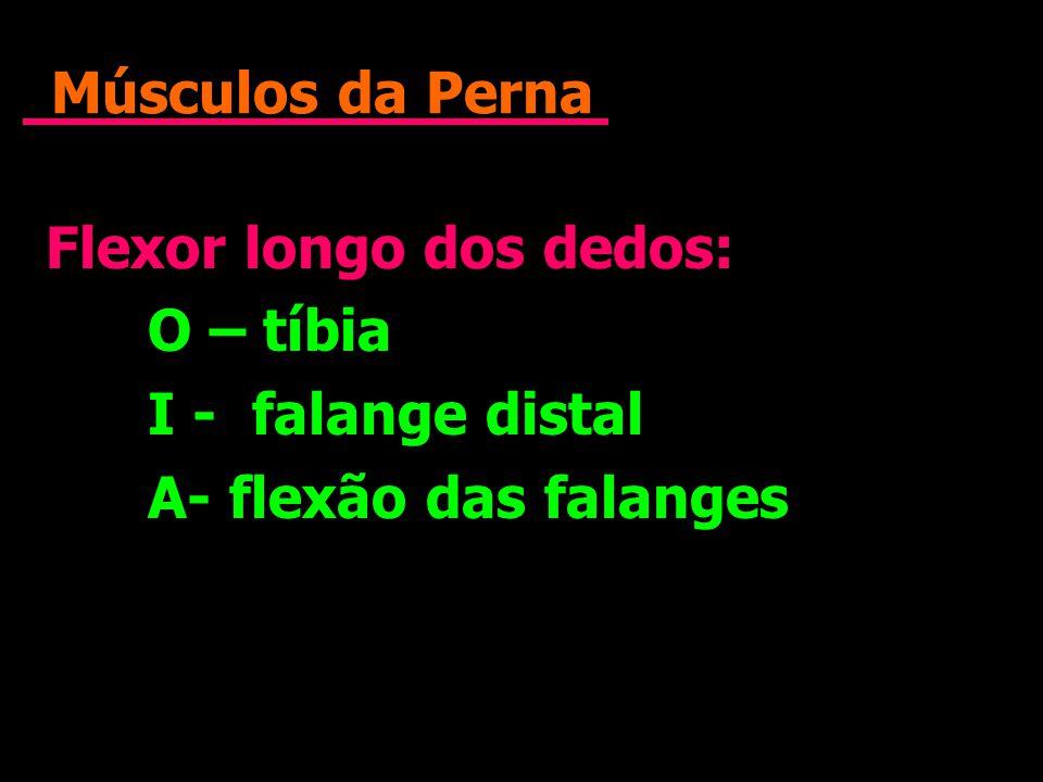 Músculos da Perna Flexor longo dos dedos: O – tíbia I - falange distal A- flexão das falanges