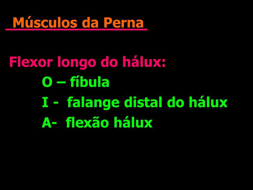 Músculos da Perna Flexor longo do hálux: O – fíbula I - falange distal do hálux A- flexão hálux