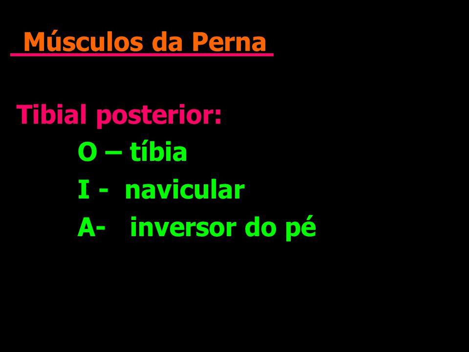 Músculos da Perna Tibial posterior: O – tíbia I - navicular A- inversor do pé