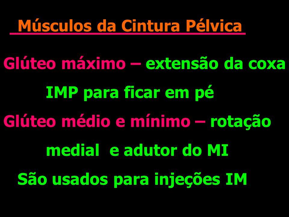 Músculos da Cintura Pélvica