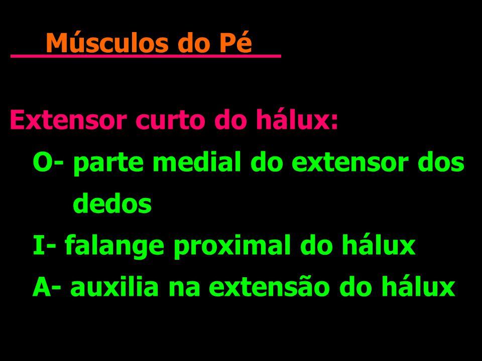 Músculos do Pé Extensor curto do hálux: O- parte medial do extensor dos dedos. I- falange proximal do hálux.
