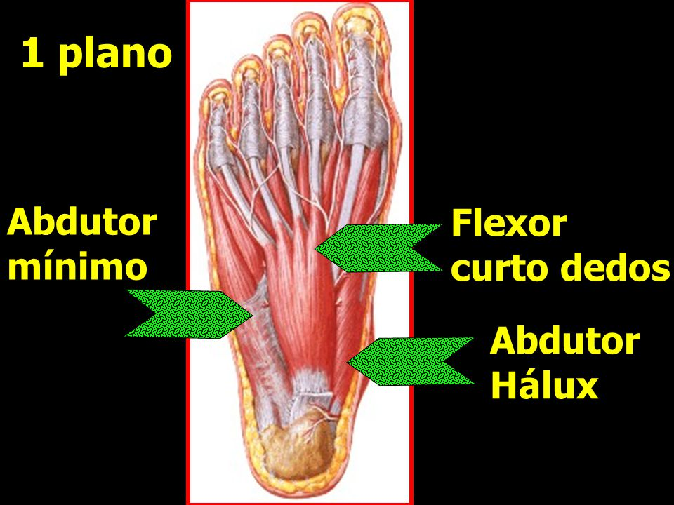 1 plano Abdutor mínimo Flexor curto dedos Abdutor Hálux
