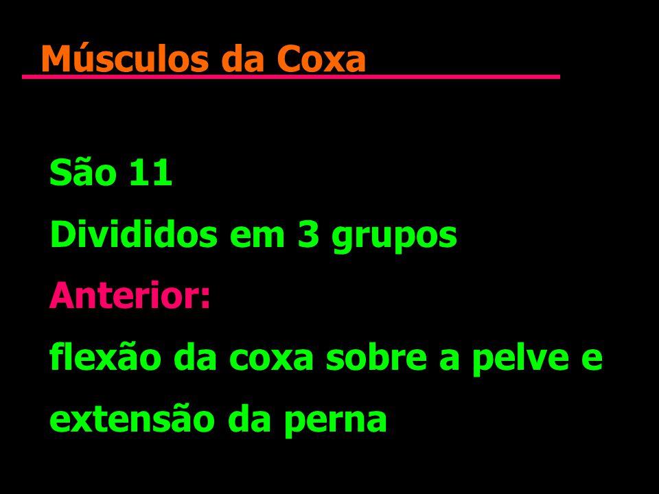 Músculos da Coxa São 11. Divididos em 3 grupos. Anterior: flexão da coxa sobre a pelve e.