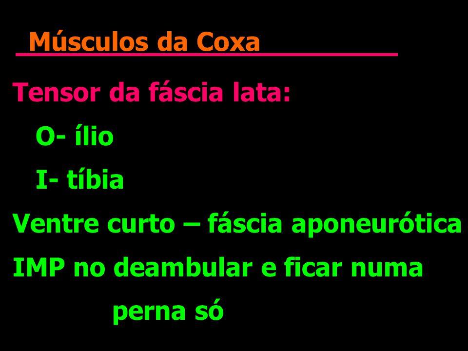 Músculos da Coxa Tensor da fáscia lata: O- ílio. I- tíbia. Ventre curto – fáscia aponeurótica. IMP no deambular e ficar numa.