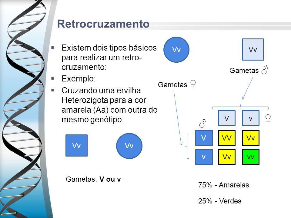 Retrocruzamento Vv. Vv. Existem dois tipos básicos para realizar um retro-cruzamento: Exemplo: