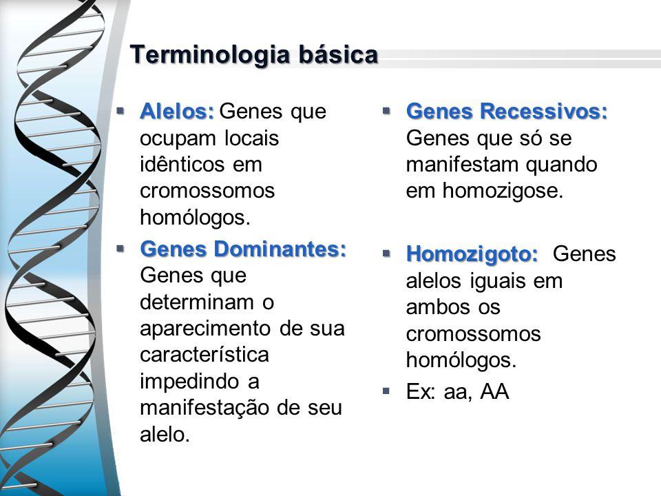 Terminologia básica Alelos: Genes que ocupam locais idênticos em cromossomos homólogos.