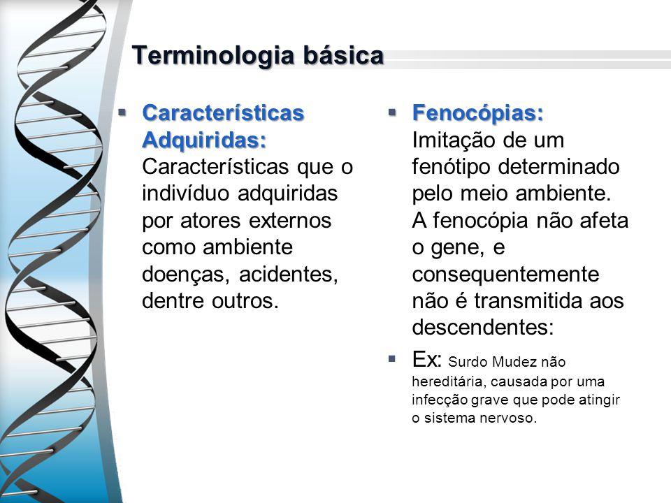 Terminologia básica