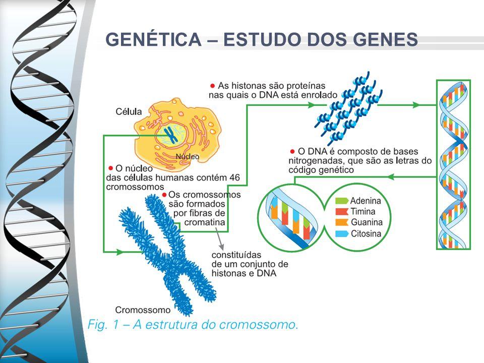 GENÉTICA – ESTUDO DOS GENES