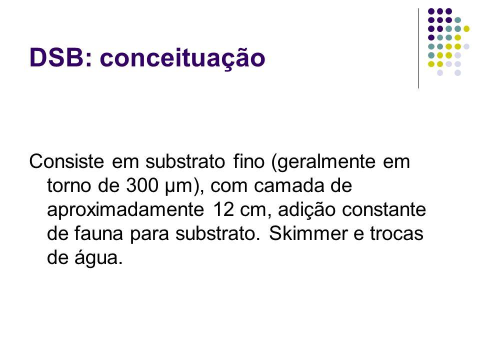 DSB: conceituação