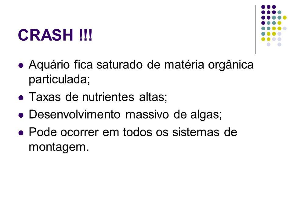 CRASH !!! Aquário fica saturado de matéria orgânica particulada;