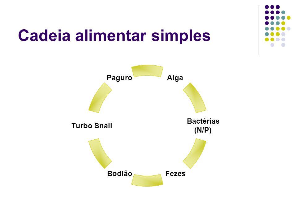 Cadeia alimentar simples