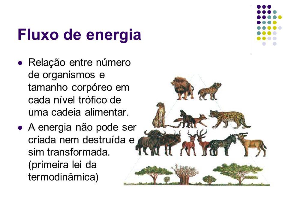 Fluxo de energia Relação entre número de organismos e tamanho corpóreo em cada nível trófico de uma cadeia alimentar.