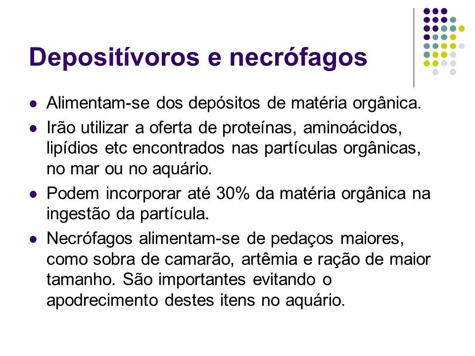 Depositívoros e necrófagos