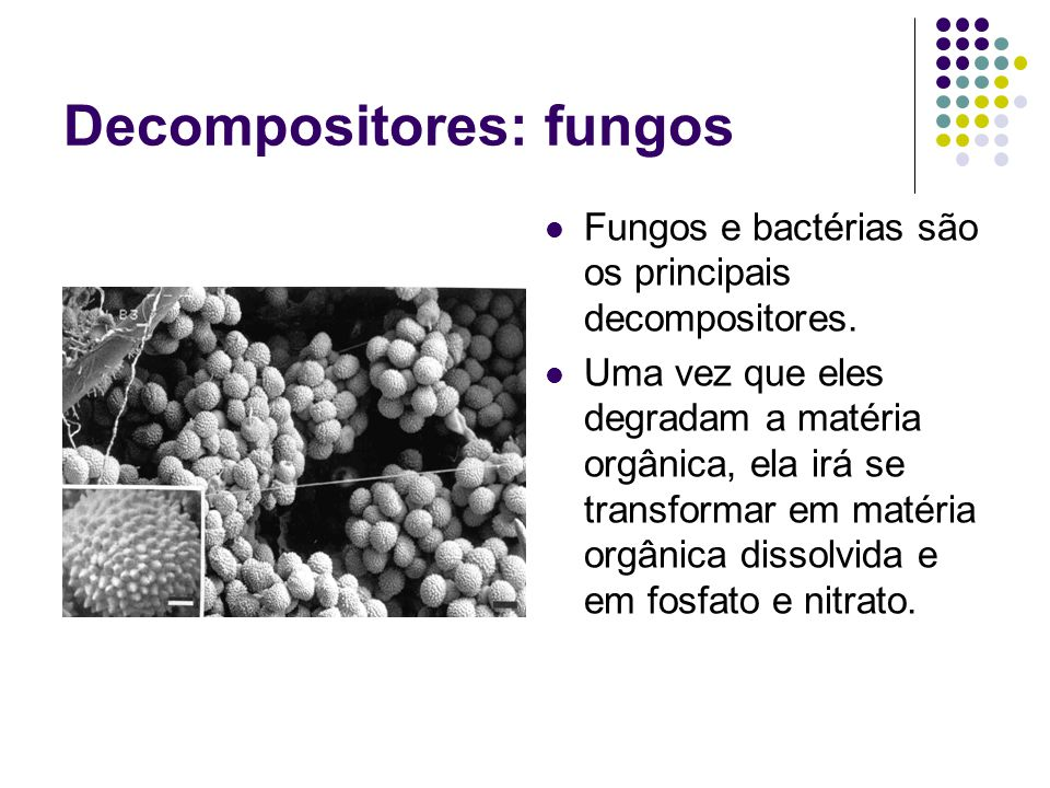 Decompositores: fungos