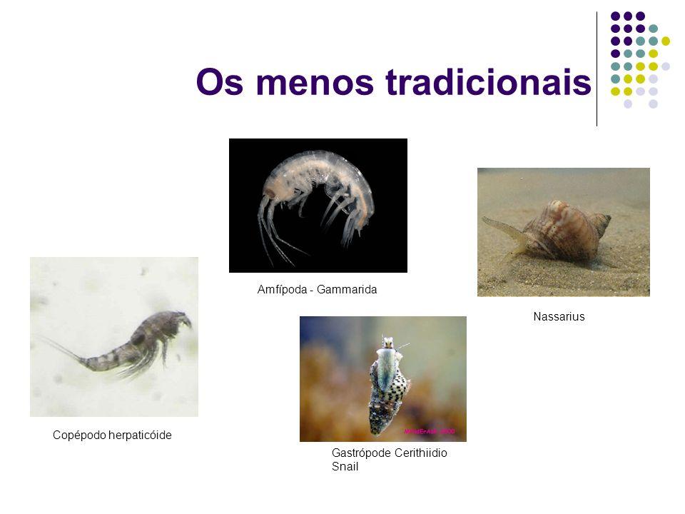 Os menos tradicionais Amfípoda - Gammarida Nassarius