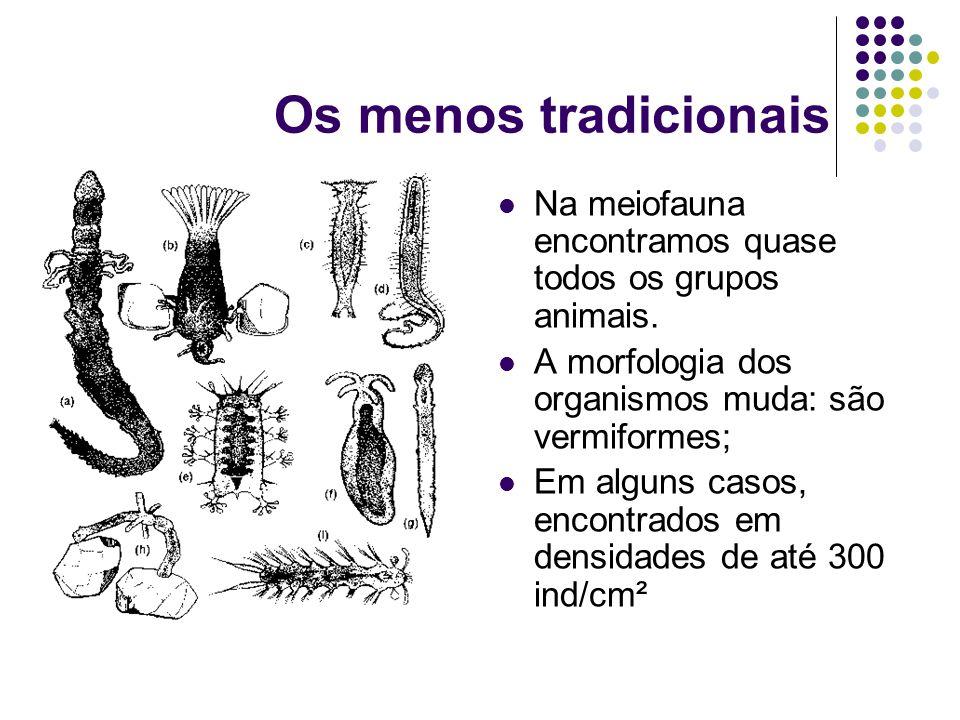 Os menos tradicionais Na meiofauna encontramos quase todos os grupos animais. A morfologia dos organismos muda: são vermiformes;