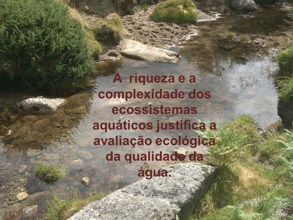 A riqueza e a complexidade dos ecossistemas aquáticos justifica a avaliação ecológica da qualidade da água.