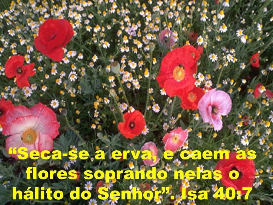 Seca-se a erva, e caem as flores soprando nelas o hálito do Senhor