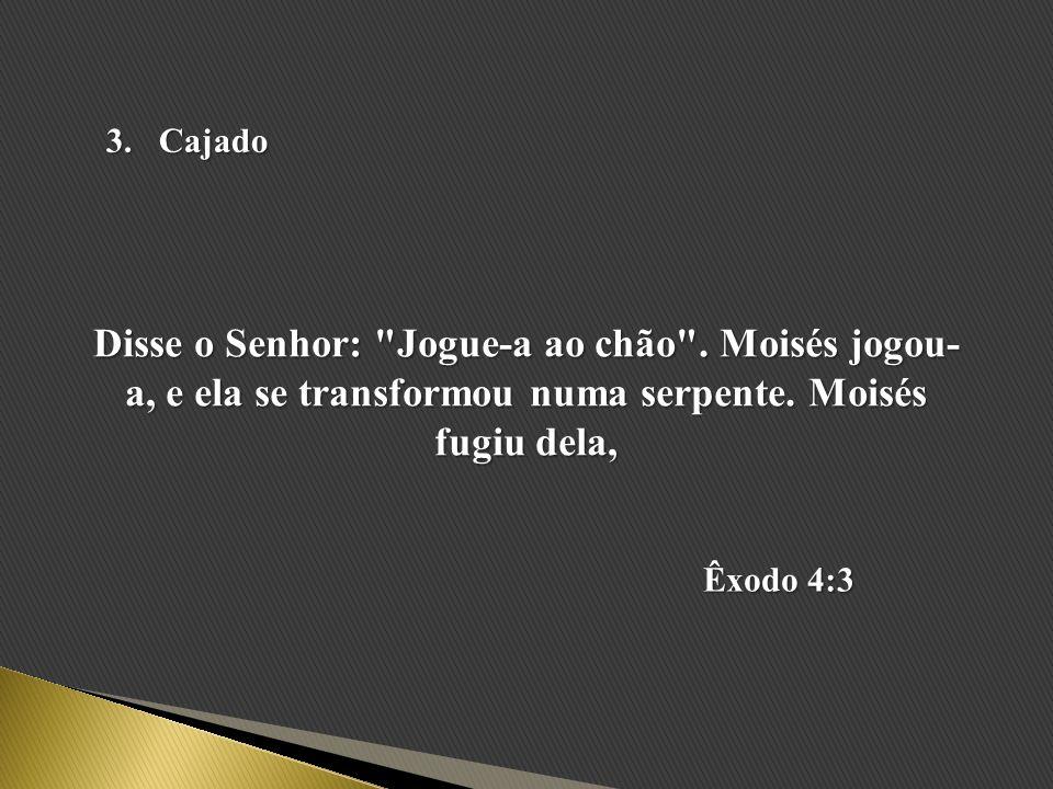 Cajado Disse o Senhor: Jogue-a ao chão . Moisés jogou-a, e ela se transformou numa serpente. Moisés fugiu dela,
