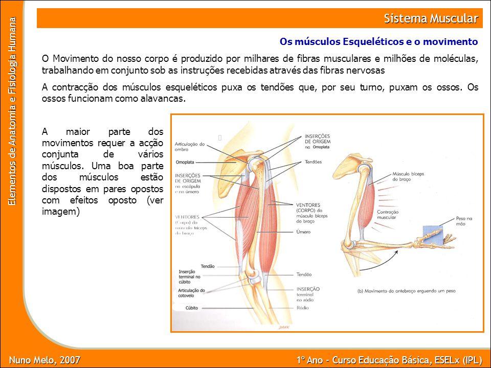Sistema Muscular Os músculos Esqueléticos e o movimento