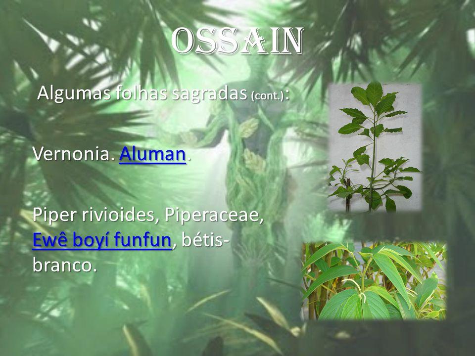 OSSAIN Algumas folhas sagradas (cont.): Vernonia. Aluman.
