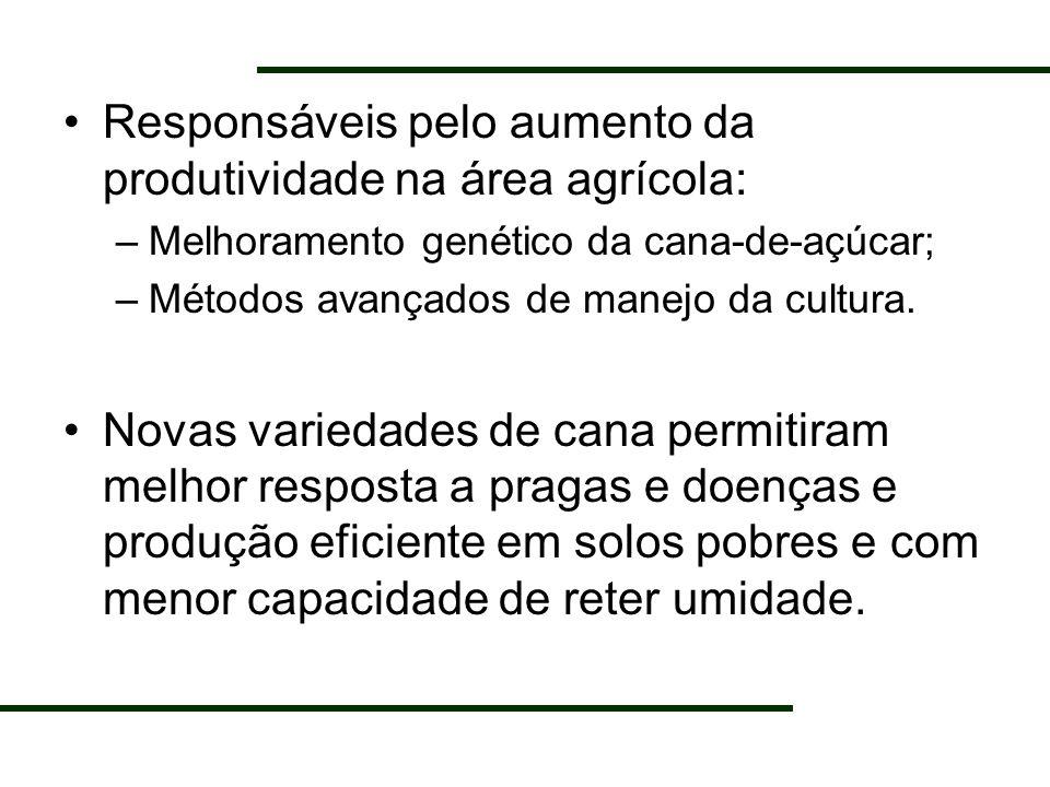 Responsáveis pelo aumento da produtividade na área agrícola: